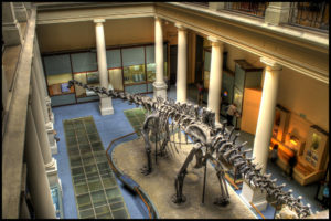 Diplodocus 300x200 Not so Frequently Asked Questions
